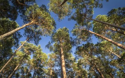 How Rewilding Can Benefit Your Business
